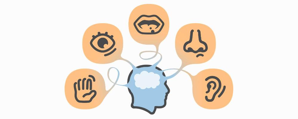 hersenen informatie