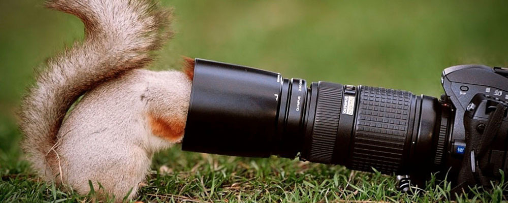 Nieuwsgierig eekhoorn