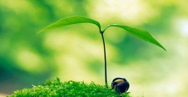 Persoonlijke ontwikkeling groei